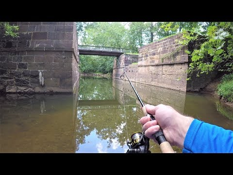 CREEK Fishing - Exploring A NEW Spot (LOADED With Fish!)