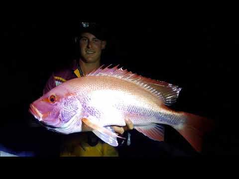 Fishing The Daintree Rainforrest