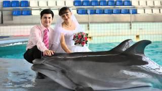 Свадьба в дельфинарии. Dolphinarium