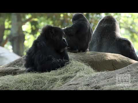 Zoo Atlanta Tickets - Video