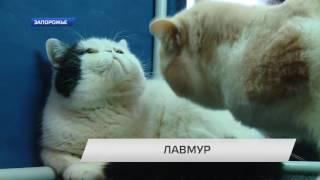 Выставка кошек «ЛавМур».