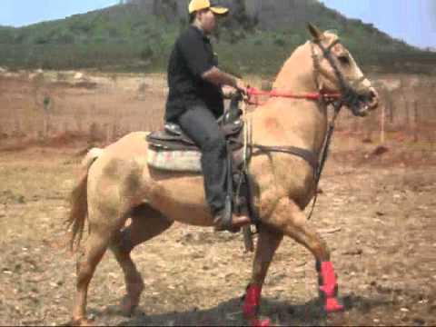 Lindo rabo de cavalo - 2 7
