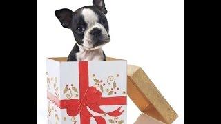Эмоции детей на подарок домашнего питомца