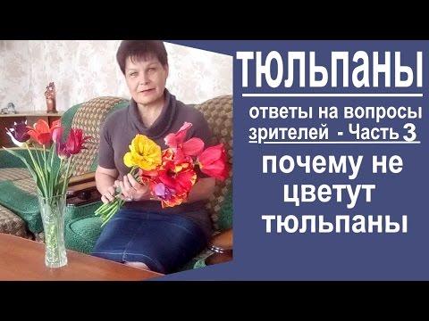 Почему не цветут тюльпаны. Ответы на вопросы зрителей. ЧАСТЬ 3