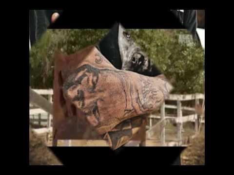 Pit Bulls and Parolees Tribute Video