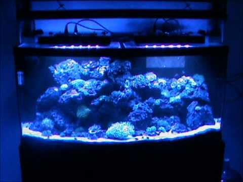 LED vs T5 lights on a 72 gallon bow front reef tank - YouTube