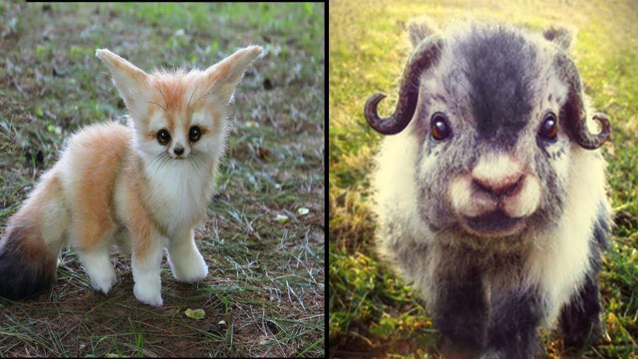 5 جراء حيوانات لطيفة اكثر مما تتخيل
