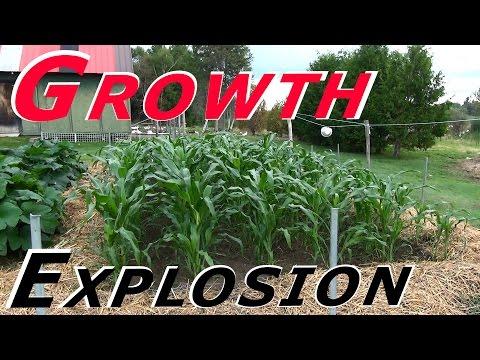 Serious Growth Explosion This Past Week #115 Heirloom Organic Vegetable Garden