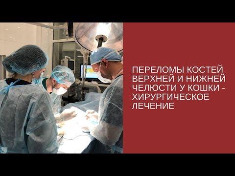 Переломы костей верхней и нижней челюсти у кошки - хирургическое лечение