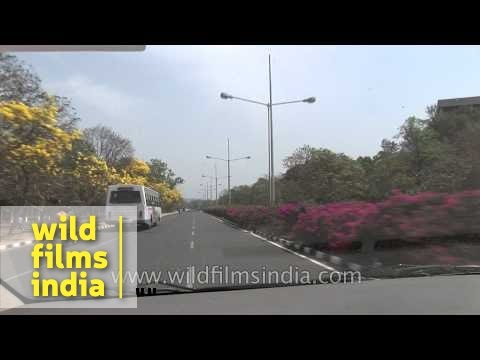 Driving on the flowering tree lined roads of Chandigarh