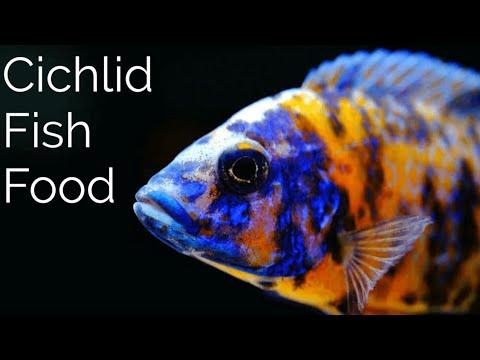 Cichlid Fish Food For All Cichlid Fish Types