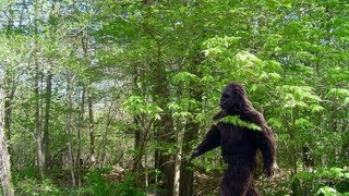 Big Foot aka Sasquatch Creature found in middle of Forest Park  in Portland Oregon [HD]