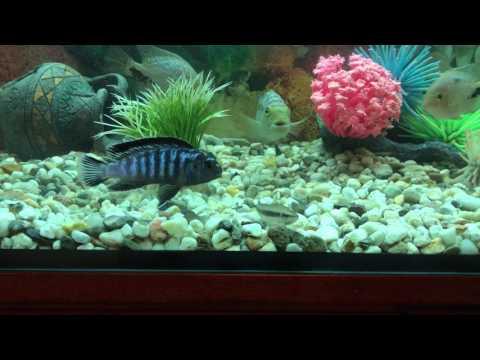 hd аквариум обои