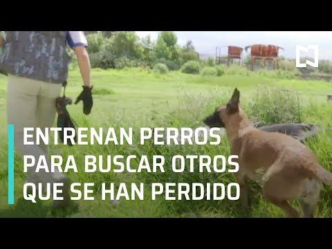 """Proyecto """"Perro busca perro"""" encuentra perros perdidos - Las Noticias"""