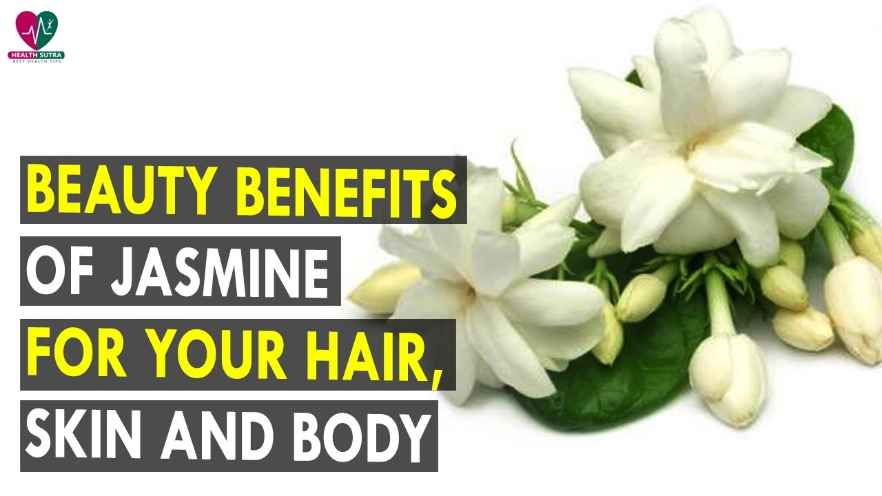 Beauty benefits of jasmine for your hair skin and body health beauty benefits of jasmine for your hair skin and body health sutra best health tips izmirmasajfo