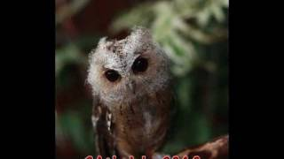 Cutch Growing Up! Owl From Chick To Adult
