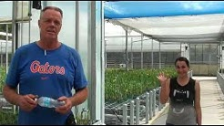 Discussion with John Albers on growing calla lilies in a retractable roof house in Florida and Cana