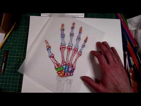 Drawing the Bones of the Hand - Hand Reflexology Chart Creation (timelapse video)