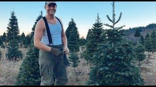 Đi Chặt Cây Thông Noel Ở Nước Mỹ Ra Sao?