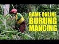 Game Online Burung Dan Mancing Asal Jangan Judi Online  Mp3 - Mp4 Download