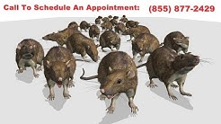 Salem Rodent Exterminator | Salem Rodent Removal | House Mouse & Roof Rat Removal Service