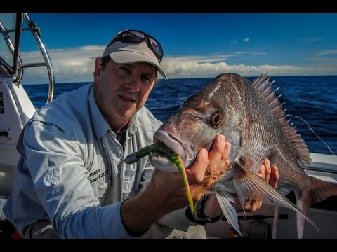 Fish eagle royal flush at rottnest island may 2015 for Royal flush fishing