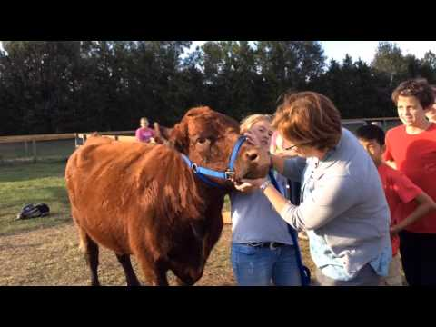 Nolan Middle School staff kiss farm animals as students donate food