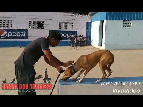 DOG Training in Chennai