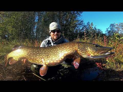 MY RECORD BREAKING MONSTER PIKE - AUTUMN PIKE FISHING IN FINLAND - ENGLISH SUBTITLES