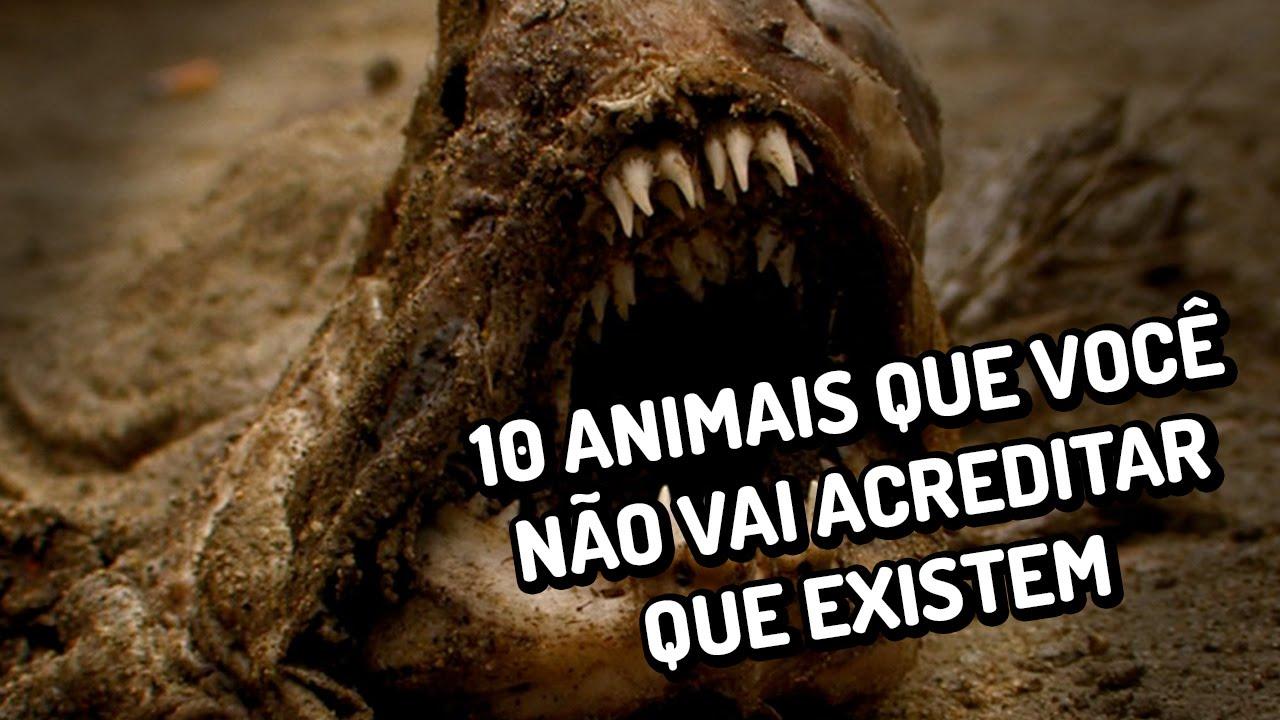 10 animais que você não vai acreditar que existem