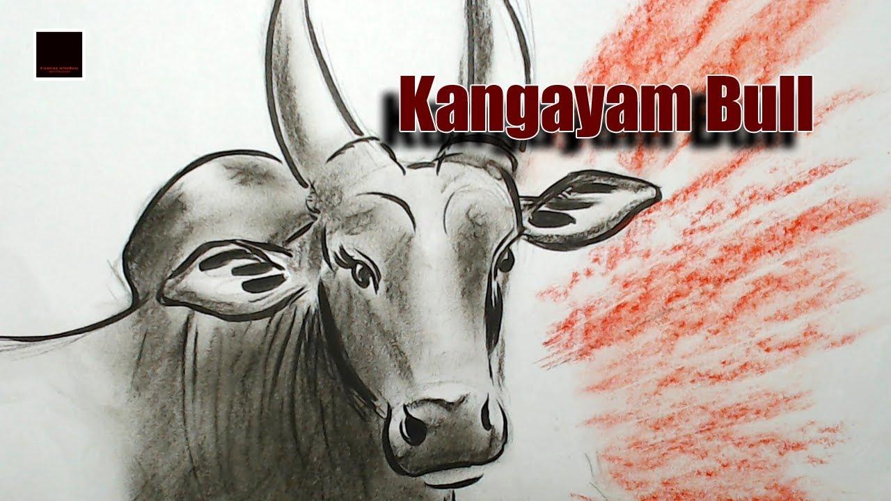 Kangayam bull drawing