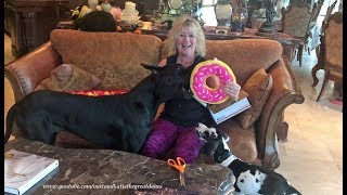 Great Dane and Puppy Love to Open Gift Box