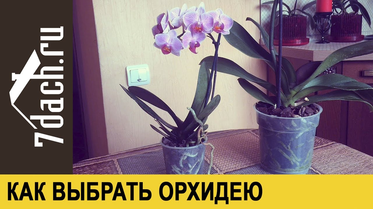 как в магазине выбрать орхидею при покупке вот