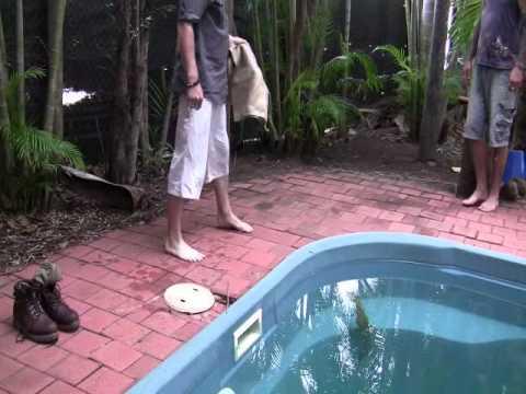 Crocodile In Pool Darwin Australia Youtube