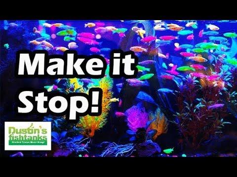 Top 5 Aquarium Fish How Did We Let This Happen Youtube