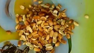 Как очистить арахис. Как очистить арахис от шелухи. Очистить арахис. Как быстро очистить арахис.