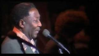 "Muddy Waters - ""Mannish Boy"" - LIVE -"