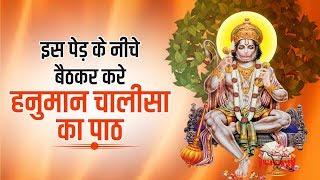 Is Ped Ke Niche Baithkar Karen Hanuman Chalisha Ka Path ||  Jai Ho India