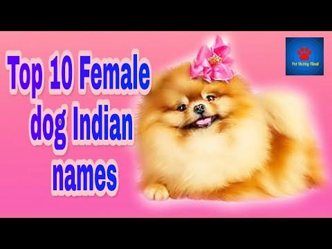 Top 10 Female Dog Indian Names