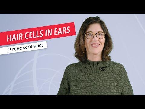 Psychoacoustics: Hair Cells in Ears are Analog-to-Digital Converters | Susan Rogers | Berklee Online