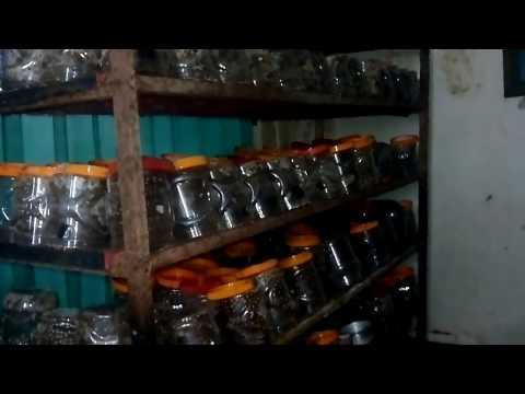 Budidaya Bibit Kroto - Jual Bibit Kroto - Ternak Bibit Kroto - Bibit Kroto Semut Rangrang Surabaya