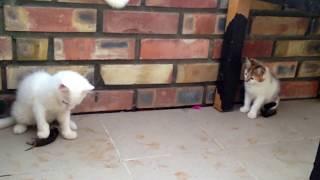 Учебно-тренировочная мышка для котят