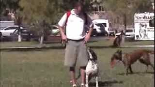 Dog Training School- Las Vegas