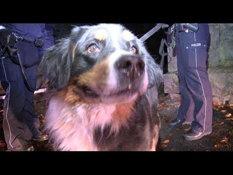 zwei hunde aus verqualmter wohnung gerettet youtube. Black Bedroom Furniture Sets. Home Design Ideas