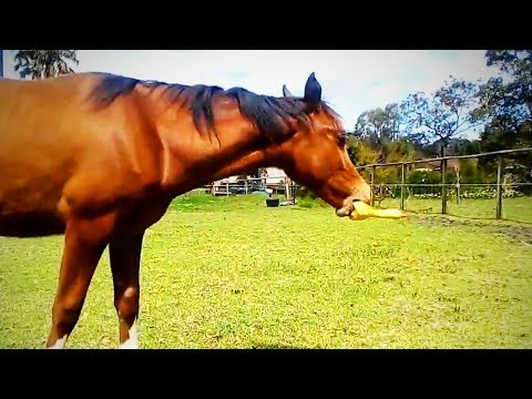 Funny Farm Animal 😹 Farm Animals Doing Funny Things (Part 1) [Funny Pets]
