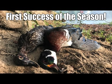 Unexpected Two Man Limit! | Early Season Wood Duck Hunt KY 2019
