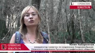 видео Сочинские зеленые зоны под угрозой из-за бабочки-огневки
