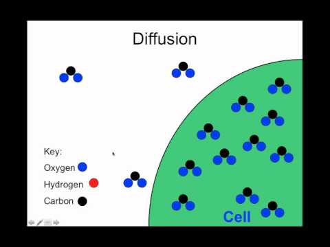 create a venn diagram comparing osmosis and diffusion lawn mower starter wiring youtube