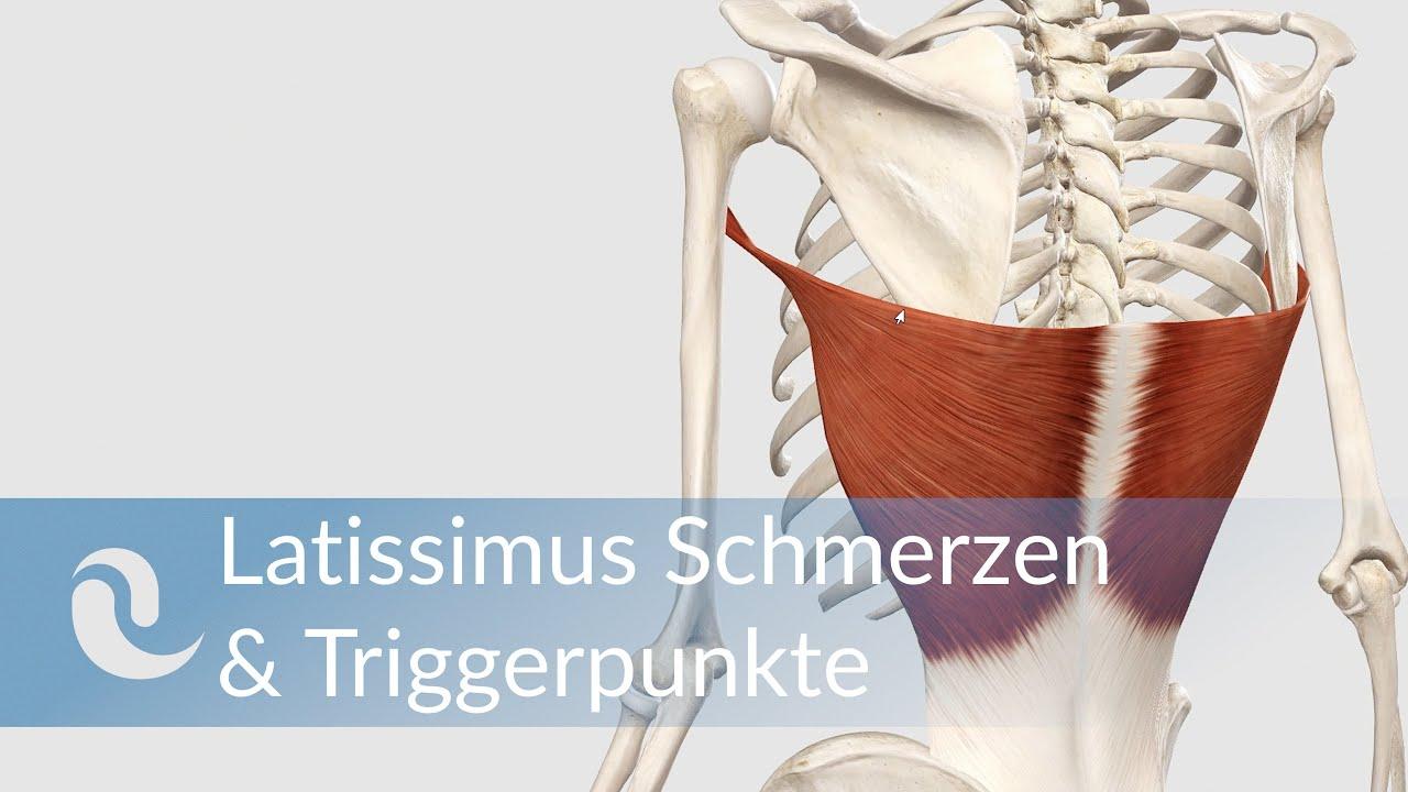 Latissimus dorsi Schmerzen & Triggerpunkte selber behandeln