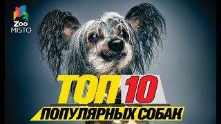 Топ 10 популярных собак\Top 10 popular dogs